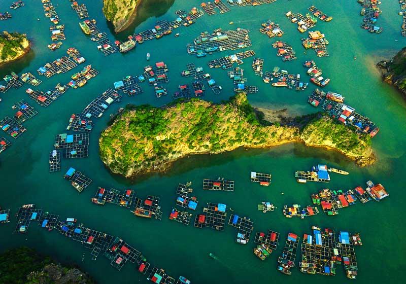 Hình ảnh làng trài trên Vịnh Lan Hạ - Cát Bà